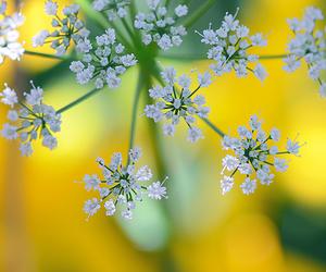 botanical, happy, and sunlight image