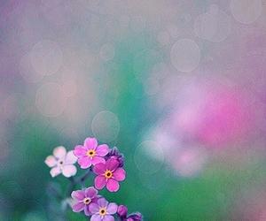 bokeh, lavender, and springtime image