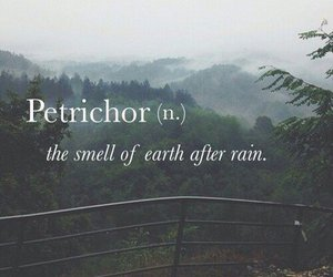 rain, petrichor, and smell image