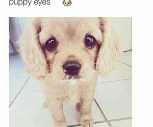 puppy, cute, and eyes image