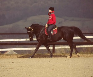 black beauty, horse, and gluck image