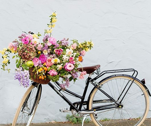bike, flower, and tips image