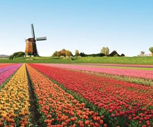 beautiful, netherlands, and europe image