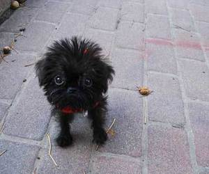 black, dog, and cute image