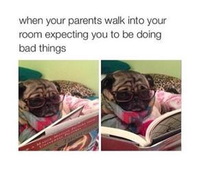 funny, dog, and parents image