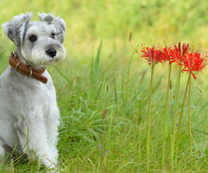 dog, flowers, and friend image