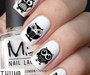 nails, owl, and black and white image