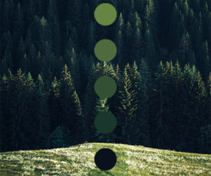 green, color, and forest image