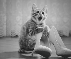 cat, shoes, and funny image