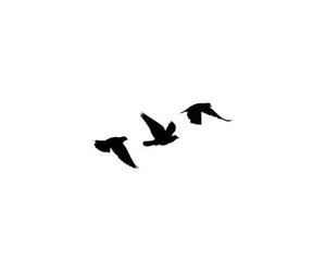 bird, tattoo, and divergent image