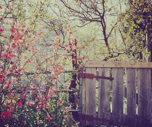 flowers, garden, and tree image