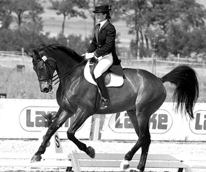 black and white, dressage, and english image