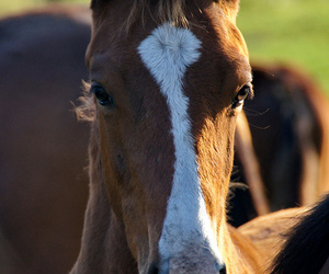 baby, cheval, and equine image