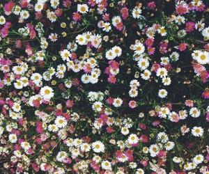 beautiful, blackandwhite, and wallpaper image