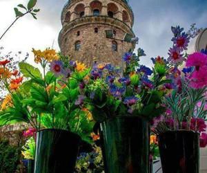 beautiful, flowers, and galata image