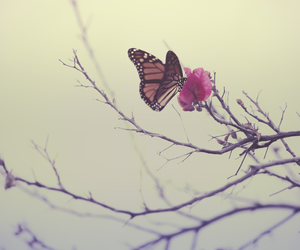 butterfly, nature, and flower image