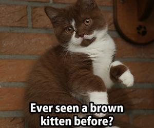 beautiful, eyes, and kitten image