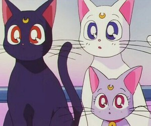cat, sailor moon, and anime image