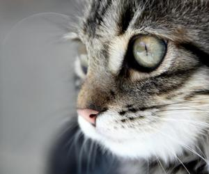 cat, photography, and love image