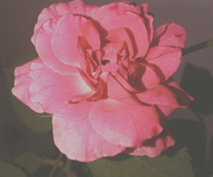 floral, flower, and pink image