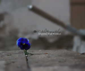 flower, nature, and photography image