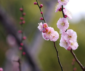 blossom, flowers, and pastel image