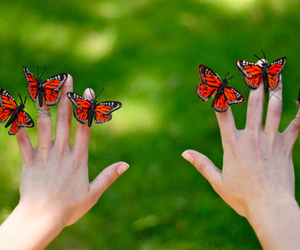 butterfly, hands, and photo image