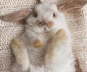 rabbit, cute, and adorable image