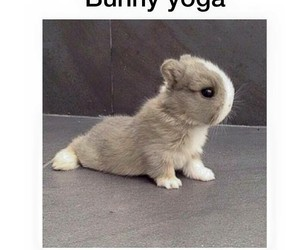 bunny, yoga, and cute image
