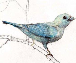 bird, blue, and art image