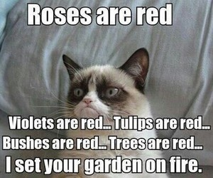 funny, cat, and fire image