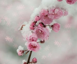 beautiful, flowers, and winter image