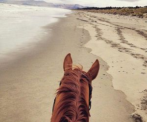 horse, beach, and photography image
