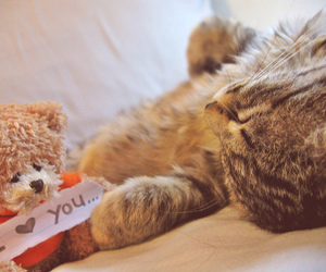 cat, cute, and teddy image