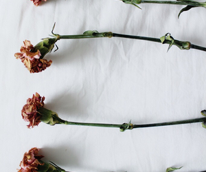 flowers, indie, and vintage image