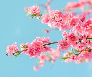 aqua, bloom, and blossom image