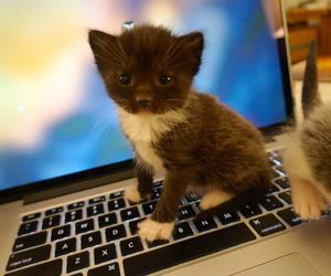 cat, baby animals, and cute animals image