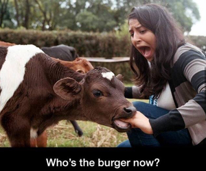 funny, lol, and burger image
