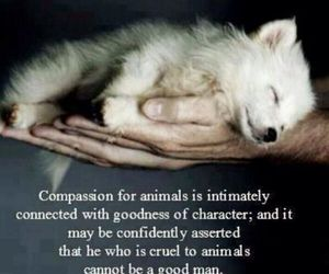 animals and compassion image