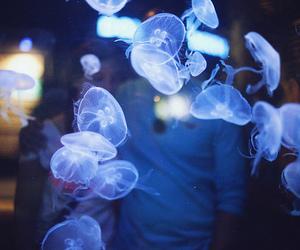 animal, medusa, and beautiful image