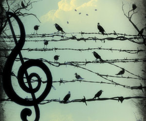 cool, feather, and musical image