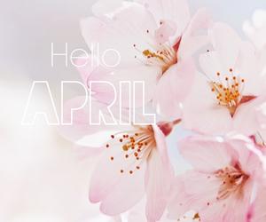 flowers, spring, and sakura image