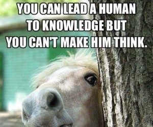 horse, inspiration, and knowledge image