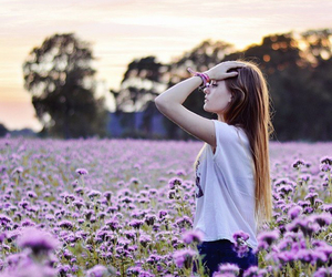 field of flowers, nature, and purple image