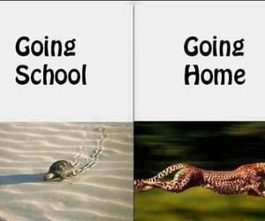 funny, home, and school image