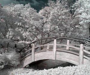 bridges image