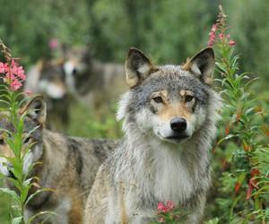 animal, grey, and nature image
