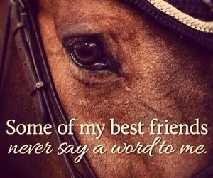 horse, best friends, and friends image