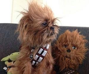 dog, star wars, and chewbacca image