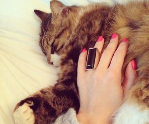 cat, cute, and nails image